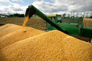 Mexico imported 14 million tonnes of corn last year from the US.