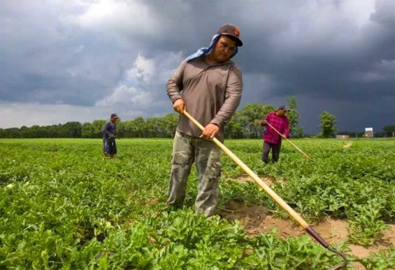 Mexican workers at a farm in Ontario, Canada