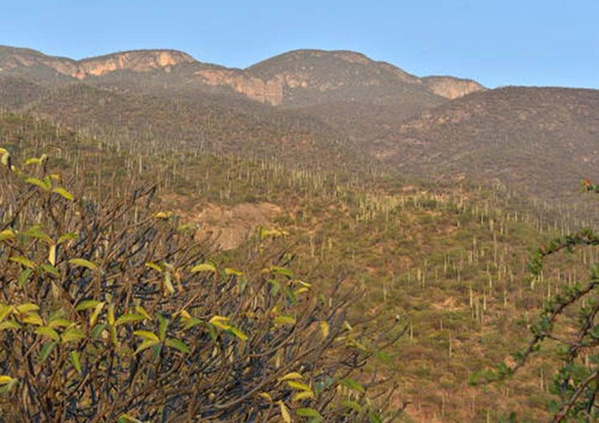 Tehuacan-Cuicatlán valley.