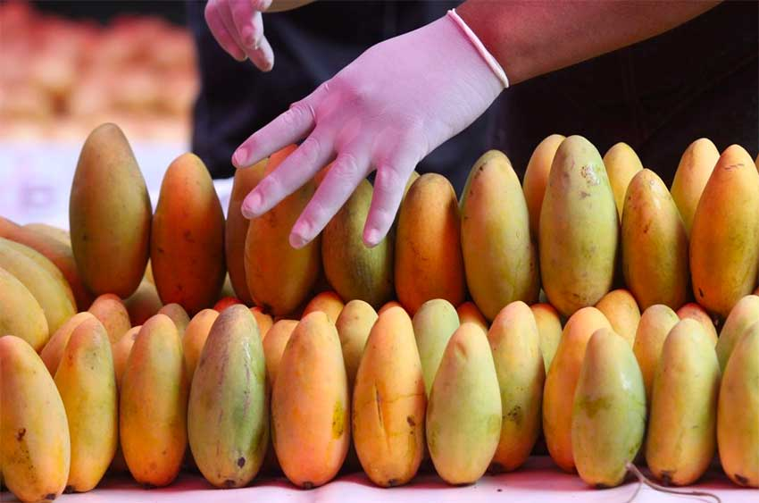 New plant will process thousands of tonnes of mangoes.