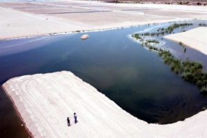Artificial wetland in Sonora helps make up for what has been lost.
