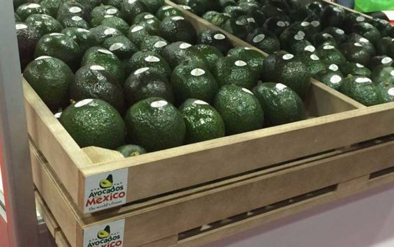 Avocado sales have soared in China.