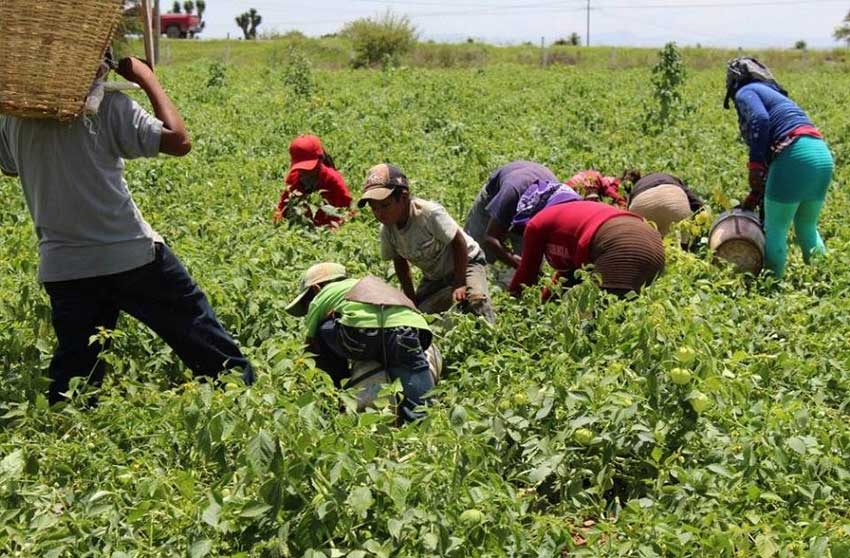 Farmworkers are often required to work under less than ideal conditions.