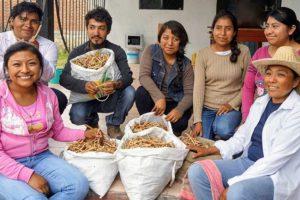The mesquite flour team at Suchilquitongo, Oaxaca.