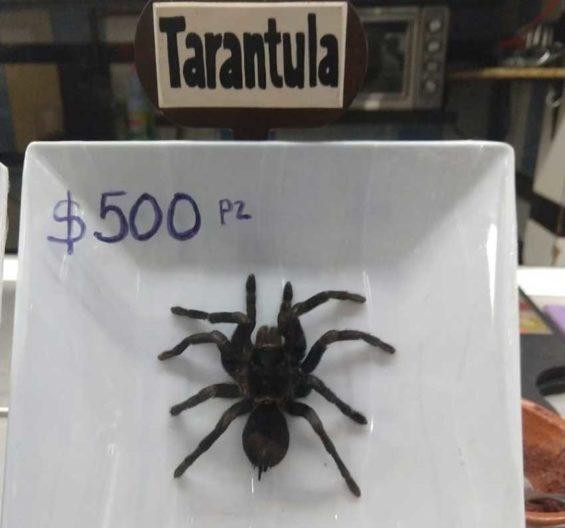 Tarantula tacos, 500 pesos.