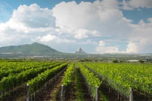 Vinaltura is one of the Querétaro winemakers that the Concours Mondial will visit.