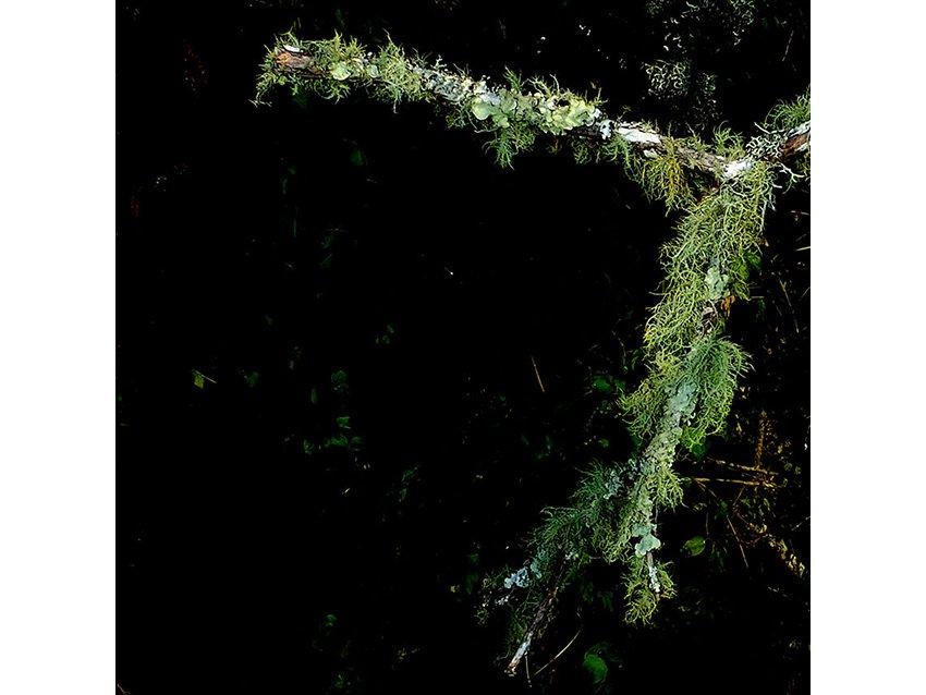 16sm-Spanish-Moss