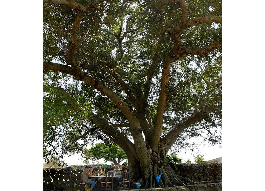 7-Picnic-under-old-fig-tree
