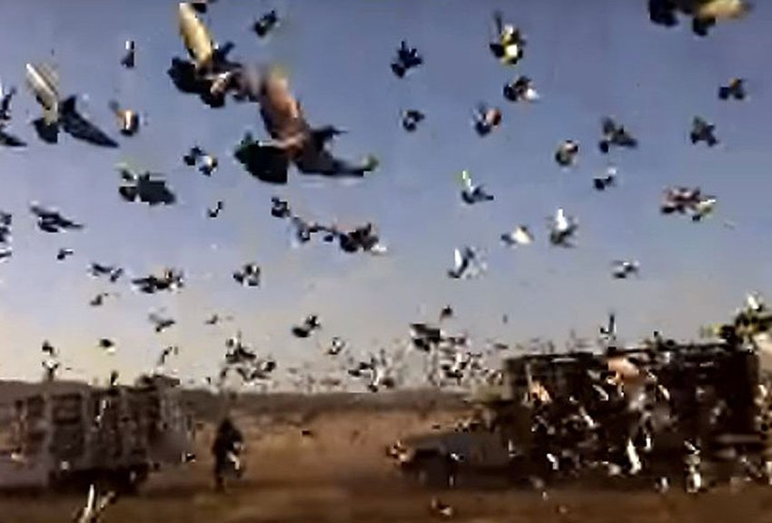 7-Pigeon-release-in-Villanueva-Zacatecas