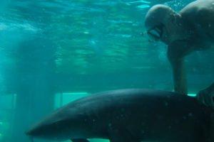 Bodie Kellogg with a 'harmless' shark.