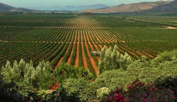 Vineyards in the Valle de Guadalupe will be getting more water.