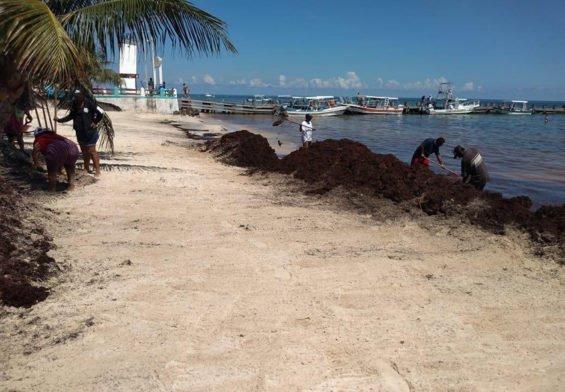Sargassum clean-up in Puerto Morelos.