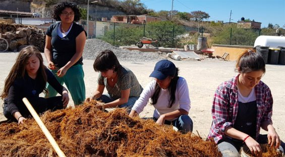 Sombra volunteers and agave fibers
