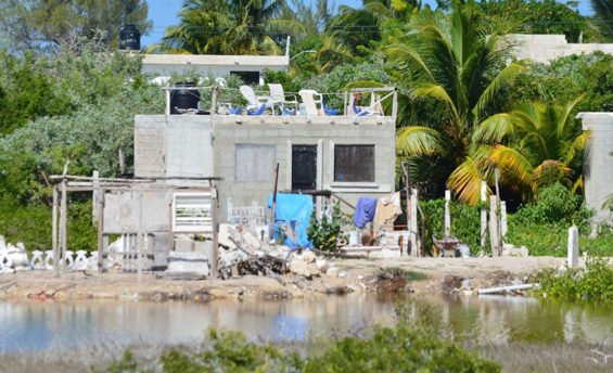 Home construction is encroaching on mangroves, charge local officials.