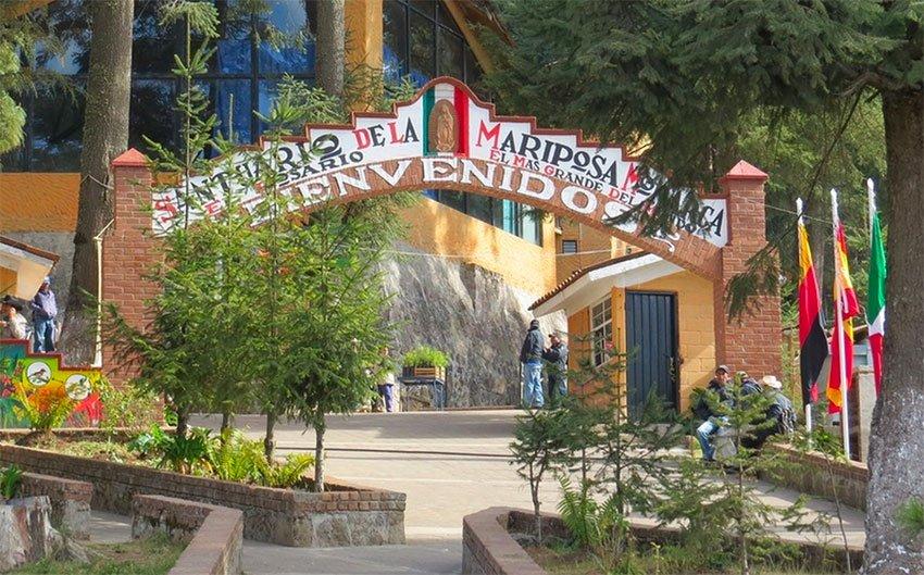 The Rosario monarch sanctuary in Michoacán.