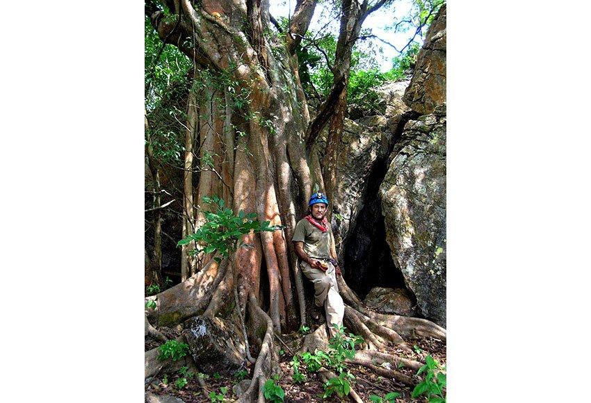 Strangler fig at the cave entrance.
