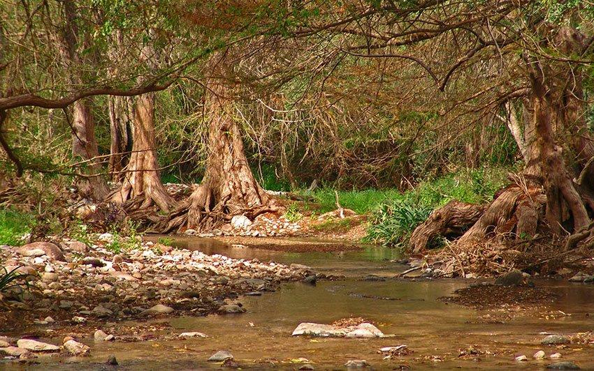 A creek in jaguar country.