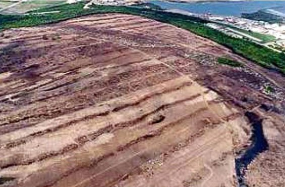 The refinery site where mangroves were allegedly removed.