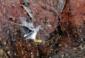 17—Wandering-Tattler-DSC_1710-Los-Islotes-Chris