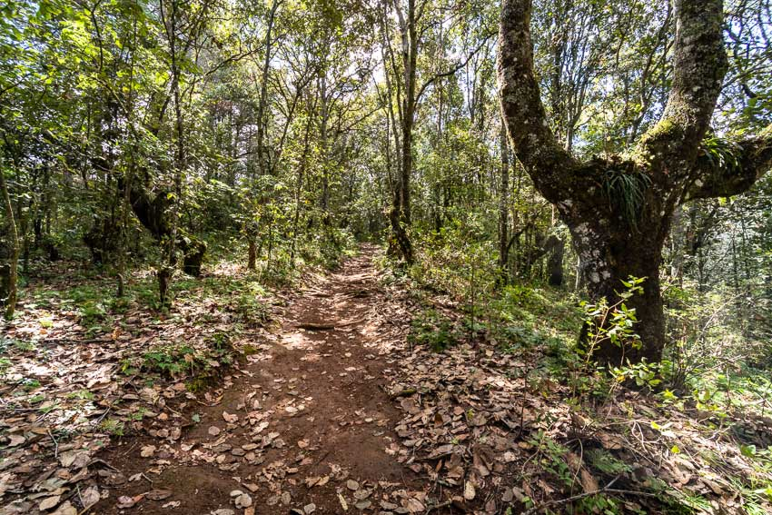 Trail through Reserva Huitepec