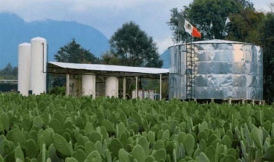 Nopalimex plant in Michoacán.