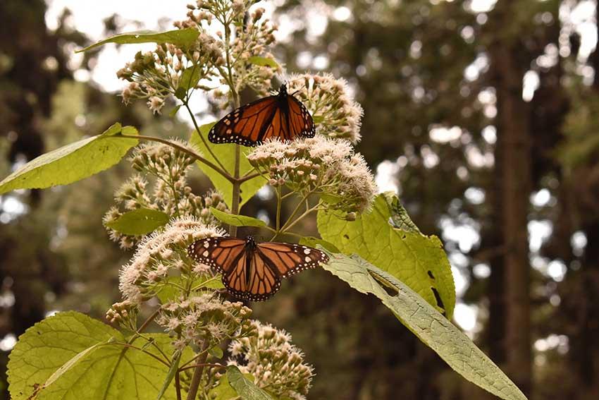Butterflies at rest near the sanctuary entrance.
