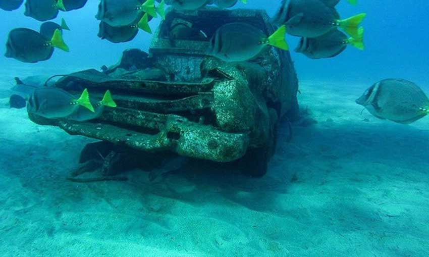 A school of fish near a vehicle on the seabed.