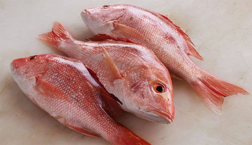 A substitute fish was provided in 54% of cases in which red snapper was ordered.