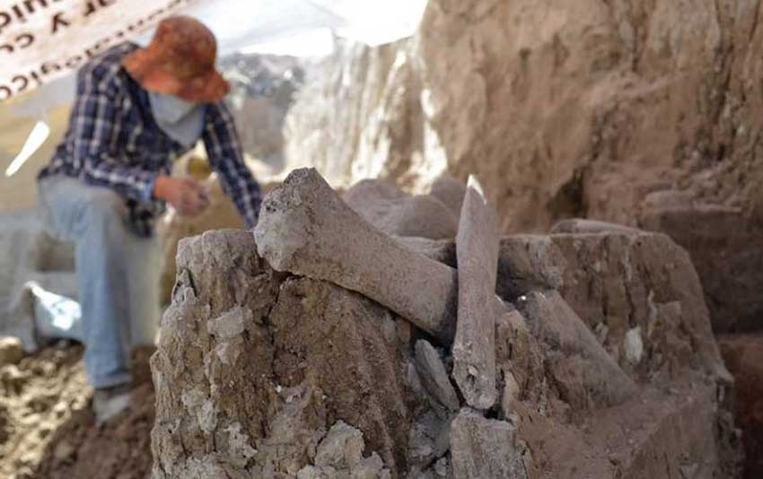 Mammoth bones found in México state while excavating a new landfill.