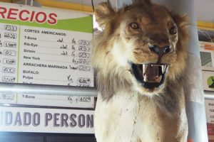 Fancy some lion for dinner? You can find it at the San Juan market.