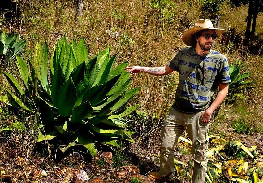 JP Mercado with the Maximiliana agave.