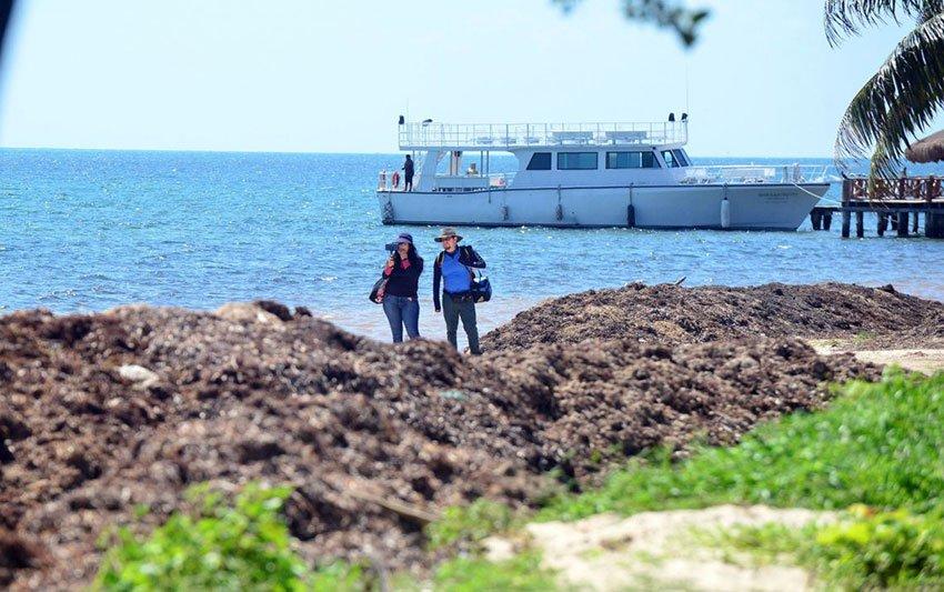 A file photo of sargassum on a Quintana Roo beach.