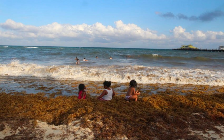 Children play in the seaweed yesterday in Playa del Carmen.