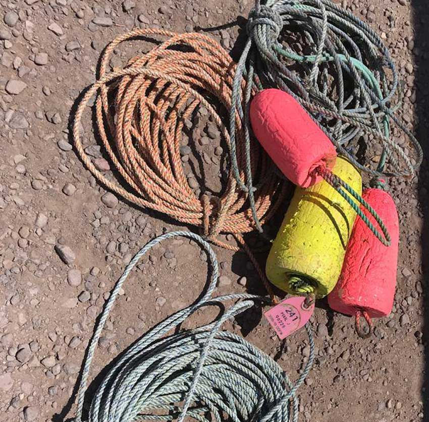 The gear in which the whale became entangled.