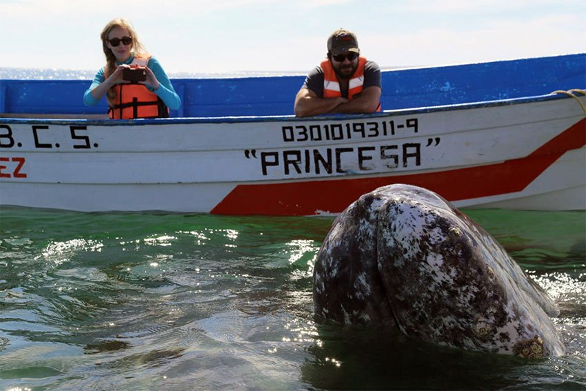 Whale-watching is a popular activity in Baja California Sur.