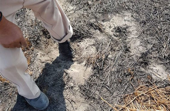 Evidence of heat coming from the ground in Chalco.