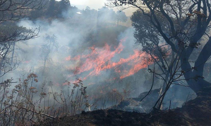 Wildfire yesterday in Pinar de la Venta, Jalisco.