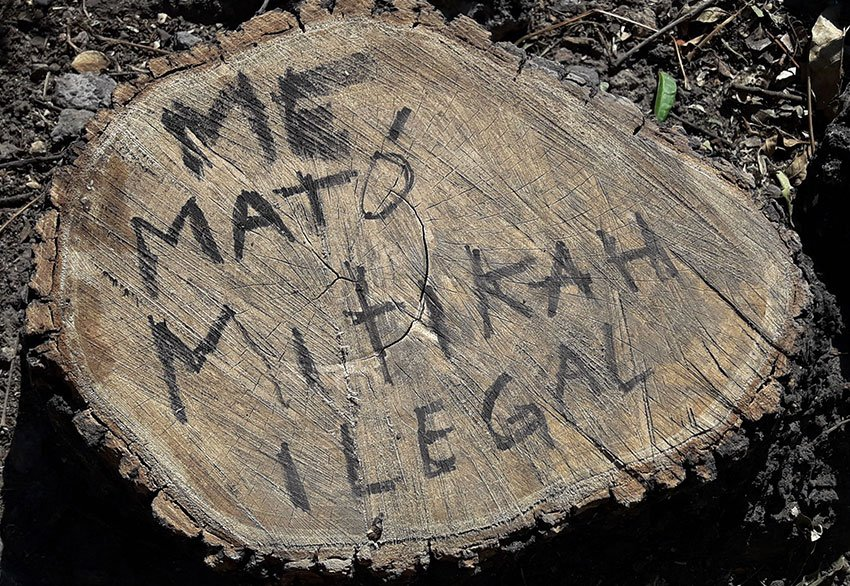 'Mitikah killed me,' reads the stump, once a tree that had to come down for a new commercial center.