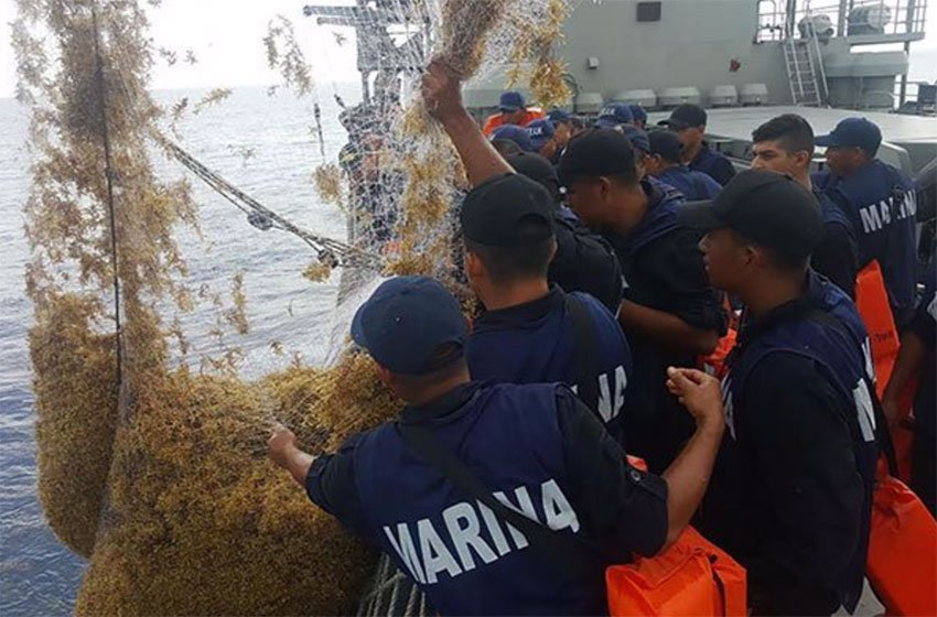 Combating narcos has been a key focus of the navy but now marines are fighting sargassum as well.