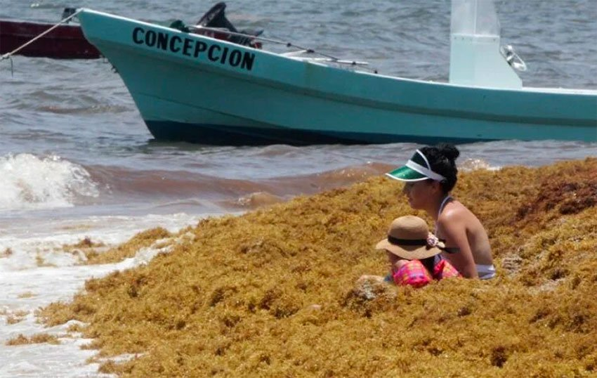 A woman and child appear unfazed by the surrounding seaweed.