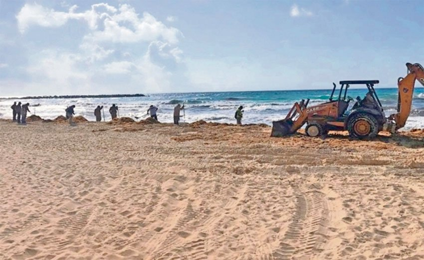 A backhoe removes sargassun from a Quintana Roo beach.