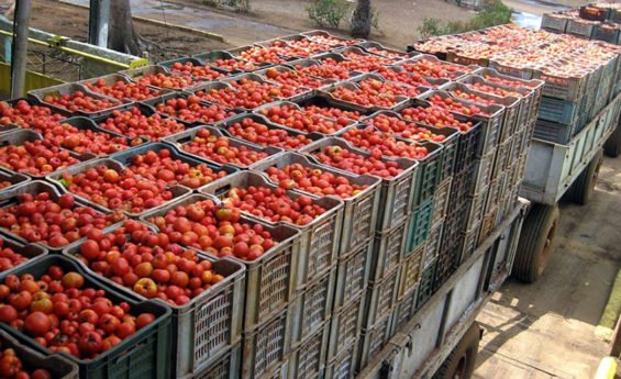 Mexico is a big supplier of tomatoes to the US.