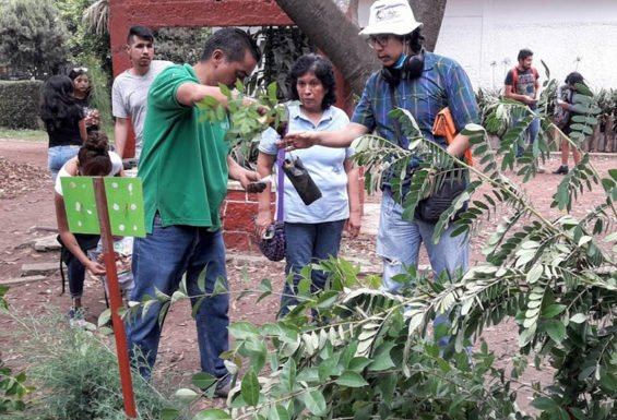 Free trees are given away at Mexico City nursery.