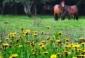 7—horses-n-flowers