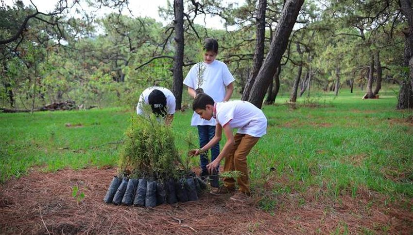 Trees ready for planting in the Jalisco forest.