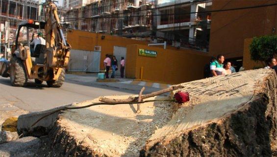 One of 80 stumps in Mexico City's Xoco neighborhood.