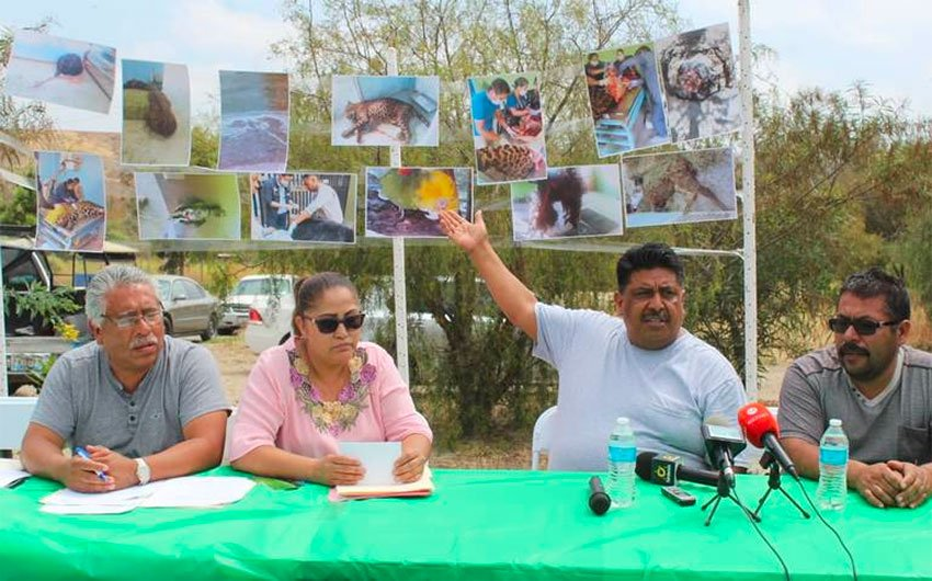 Photos of dead animals on display during press conference on conditions at Tijuana zoo.