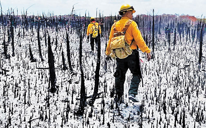 Firefighters walk through a burned area of the reserve.