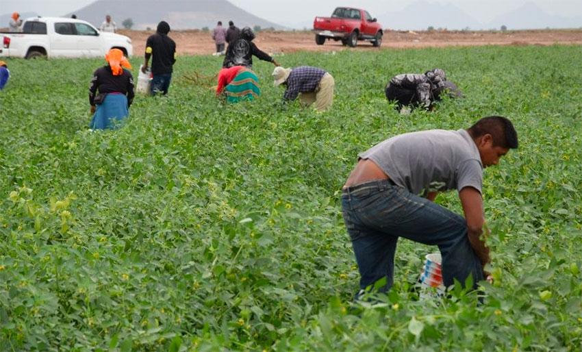 Farmworkers in Sinaloa,