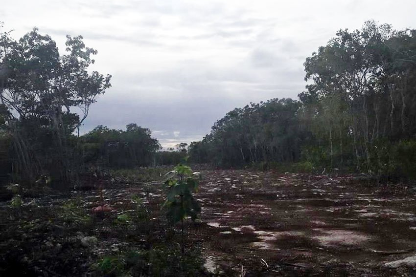 Burned forest land in Puerto Morelos.
